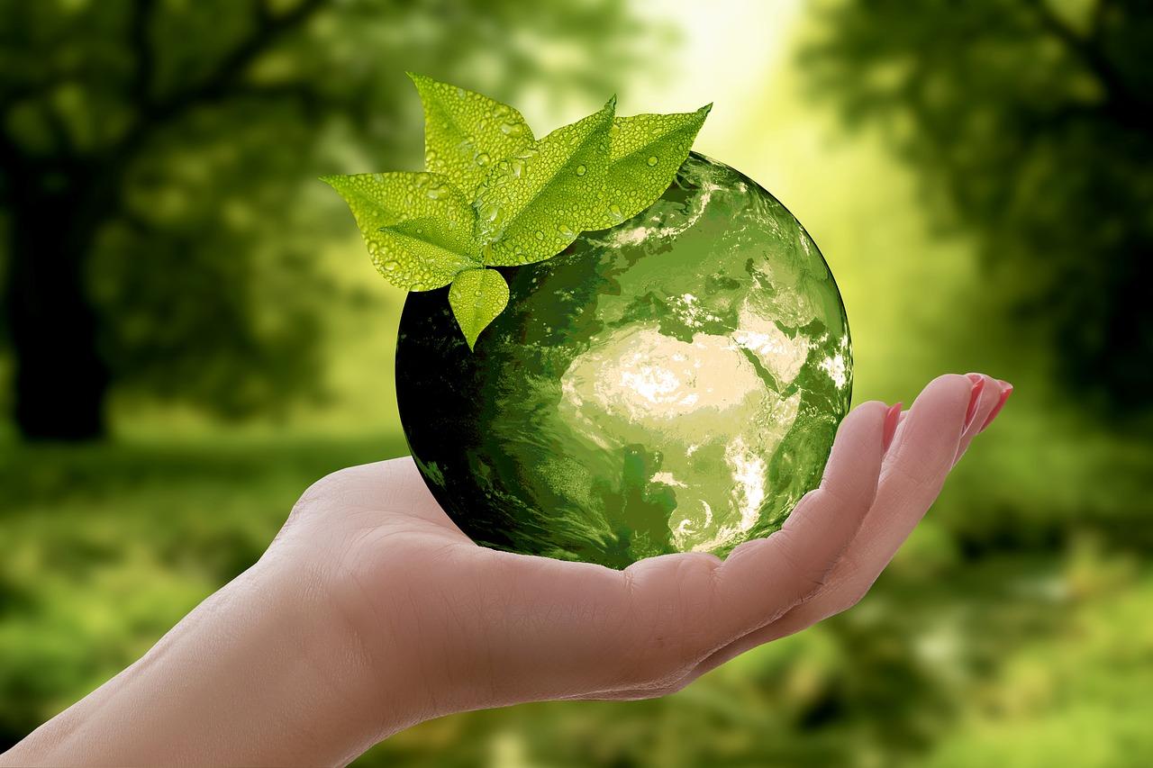 Cómo crear un hogar sostenible en cinco pasos