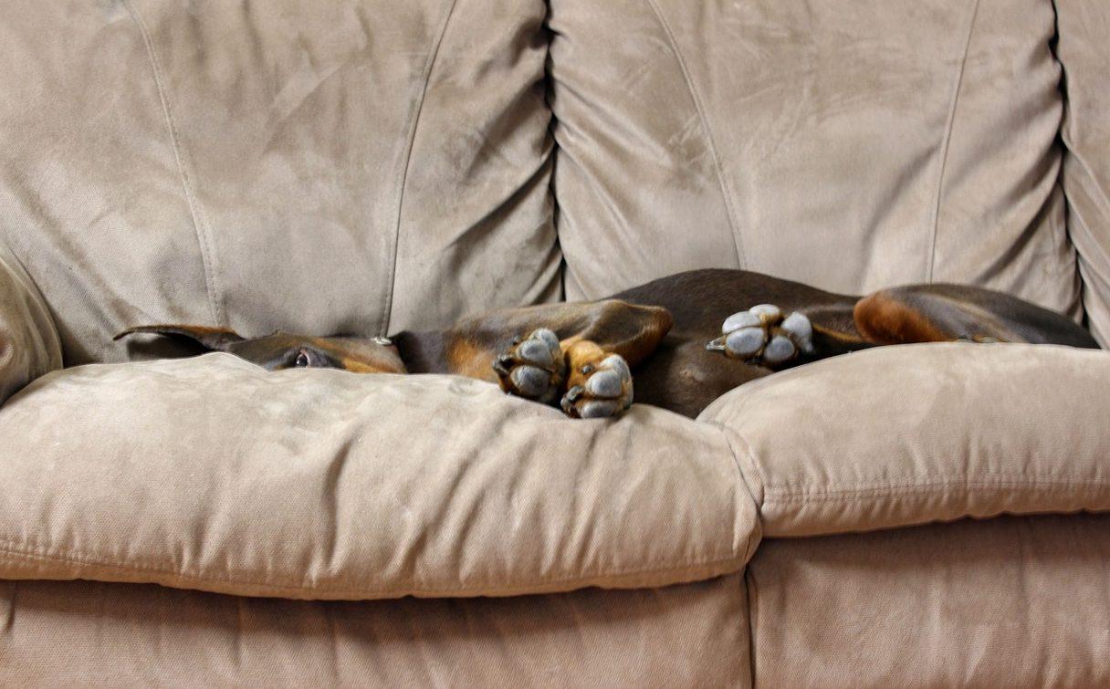 Consejos para comprar un sofá - Agencia Iglesias