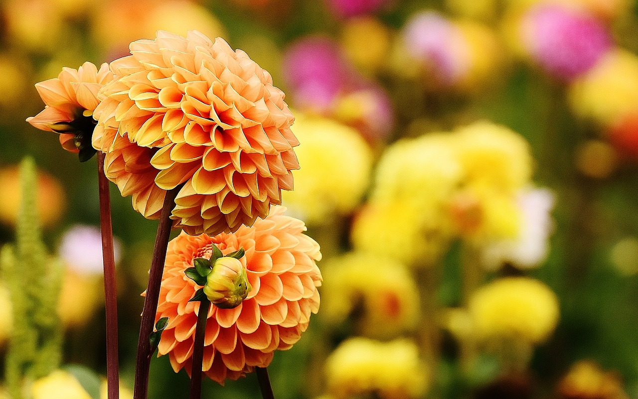 Cuidados del jardín en otoño - Agencia Iglesias